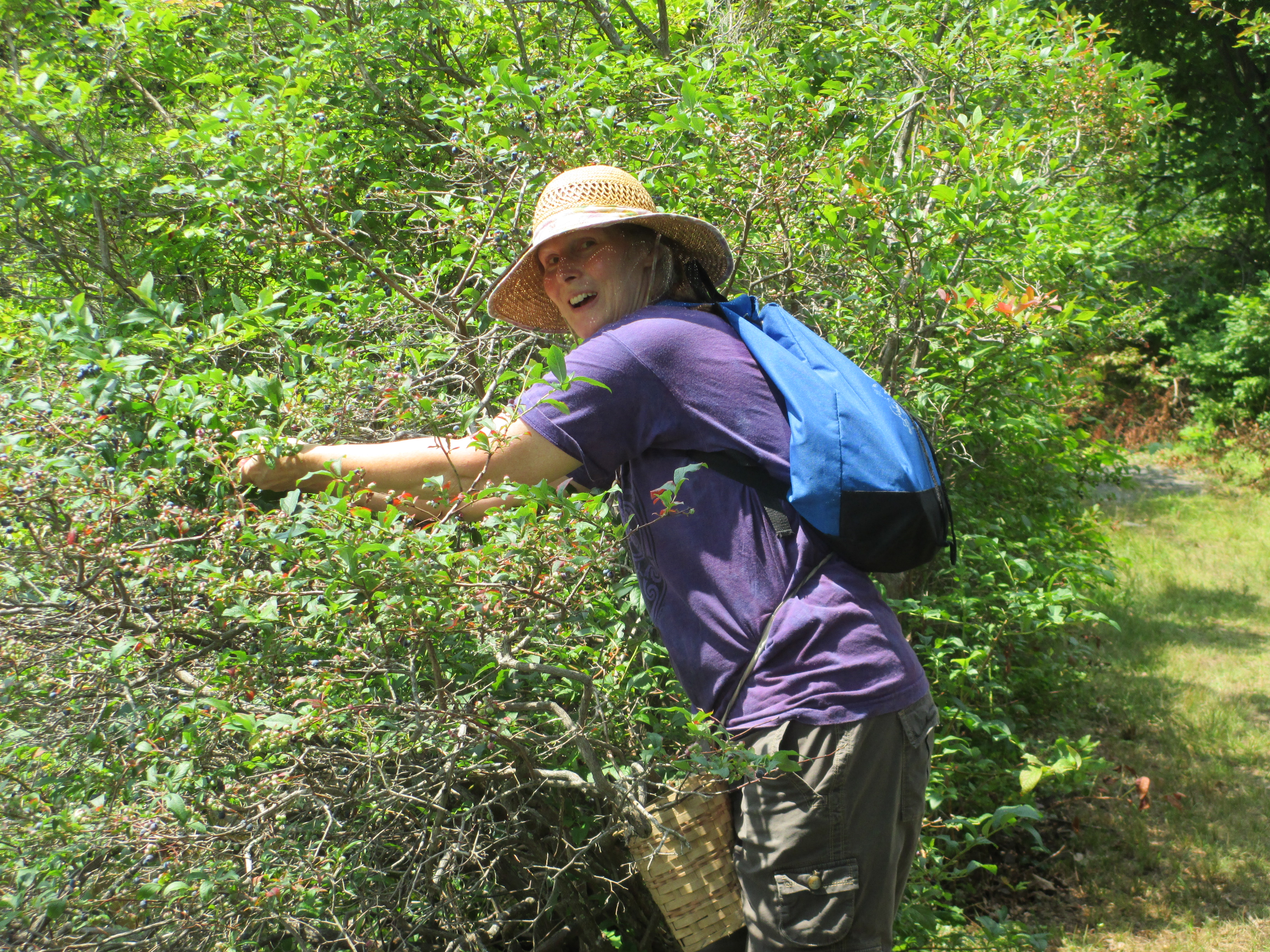 2014-08-08 blueberry foraging